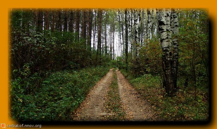 прямая дорога в лесу.jpg