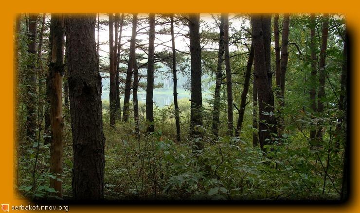 утро в лесу.jpg