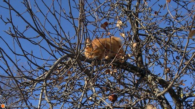 12. Кошак на дереве.jpg