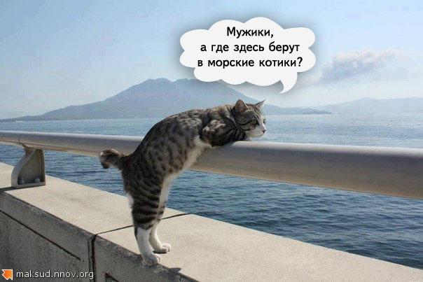 морские_к.jpg