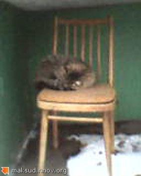Кошак на стуле.jpg