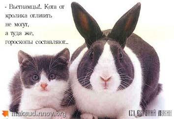 Кот и кролик.jpg