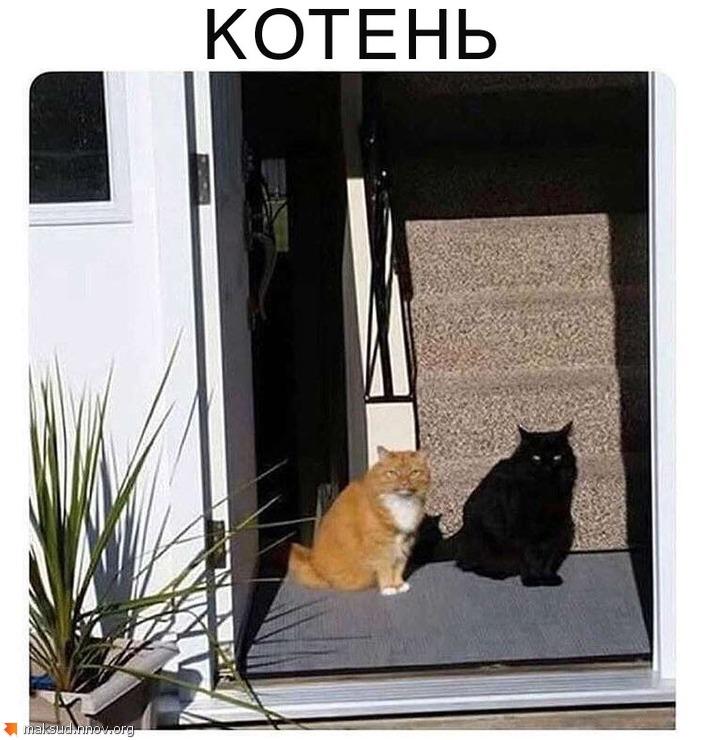 Котень.jpg