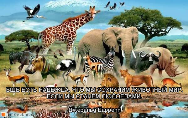 Животный мир.jpg