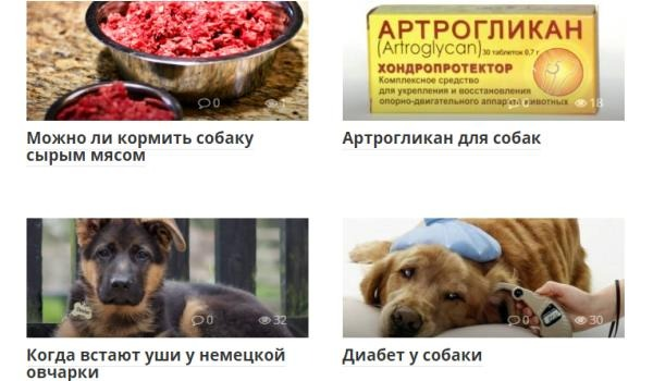 Сайт о собаках USOBAKI.COM