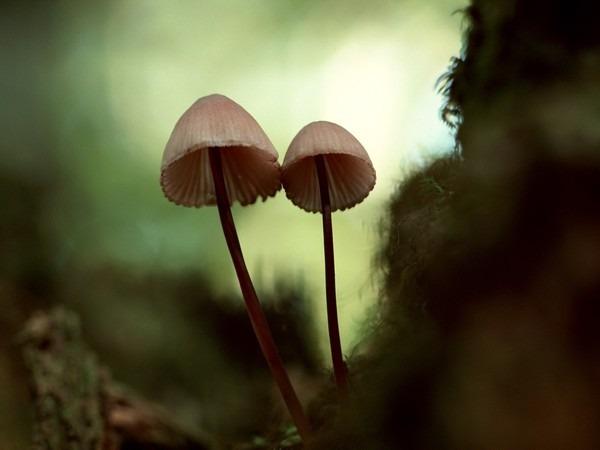 психоделики, грибы