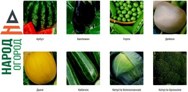 Качественные семена лучших производителей