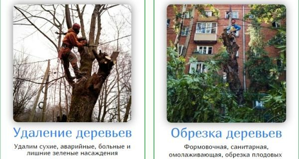 Обрезка Деревьев moscowarborist.ru