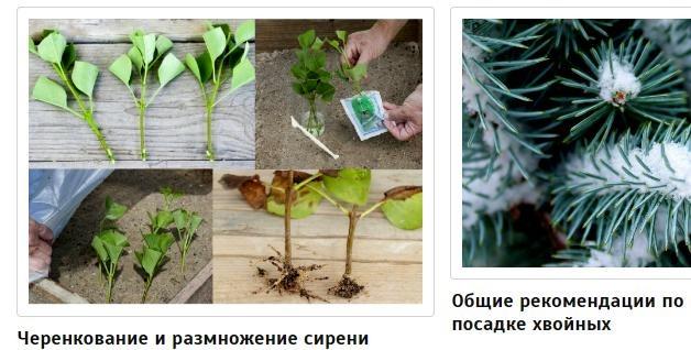 gardenrus.ru